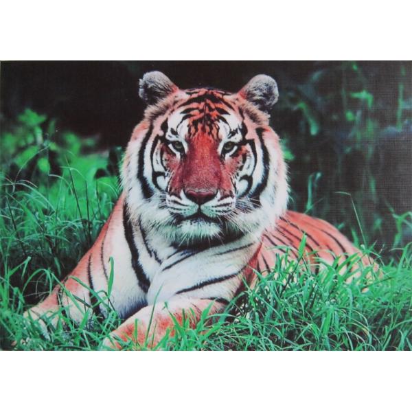 Dekorativní samolepící tapeta na notebook - Tygr